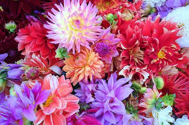 prana flowers