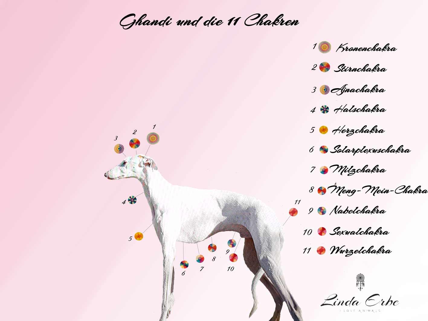 chakras dog