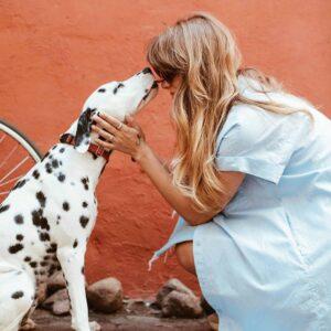 Dalmatiner küsst Frau