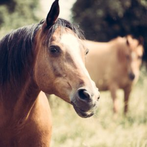 animal communication horse